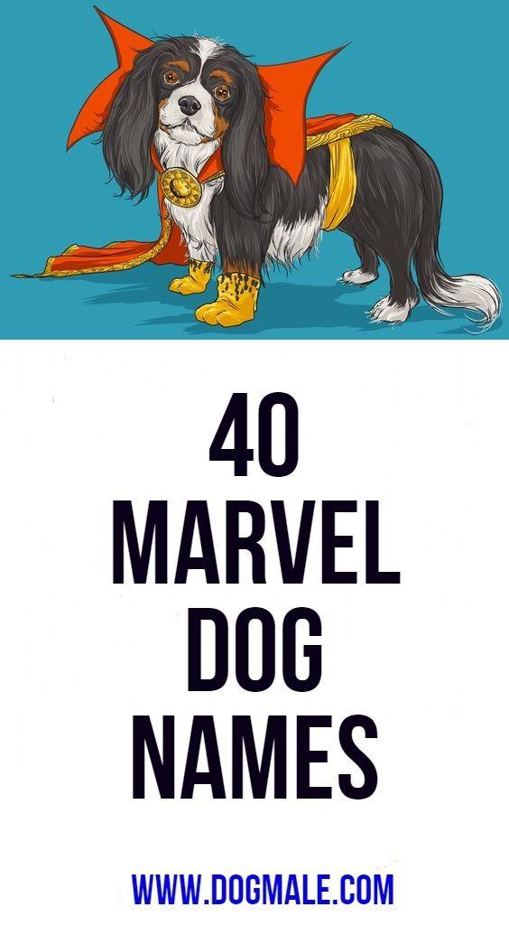 40 Marvel Dog Names Cute Names For Dogs Dog Names Boy Dog Names