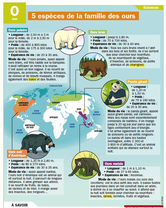 Fiche exposés : 5 espèces de la famille des ours