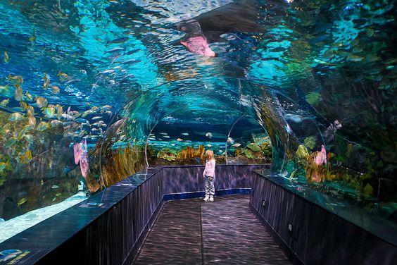 Best aquarium ever...in Pigeon Forge TN