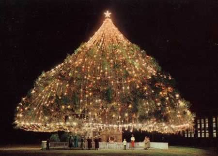 10 Most Amazing Christmas Trees From Around The Globe Amazing  - Spanish Christmas Trees