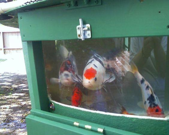 Install Window Fiberglass Koi Hatchery Tank Quarantine Tank Koi Fish Stock Tank Pinterest