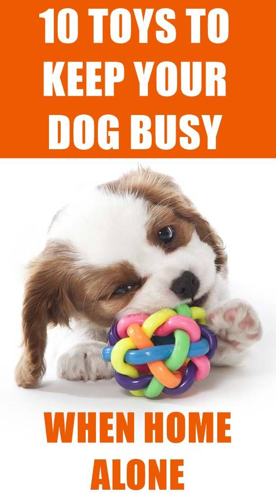 Leaving Your Dog Home Alone While You Re At Work Is Often Necessary So How Can You Keep Him Busy During That Time Dog Busy Toys Small Dog Toys Best Dog