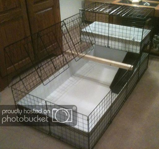 Pin On Diy Guinea Pig Projects