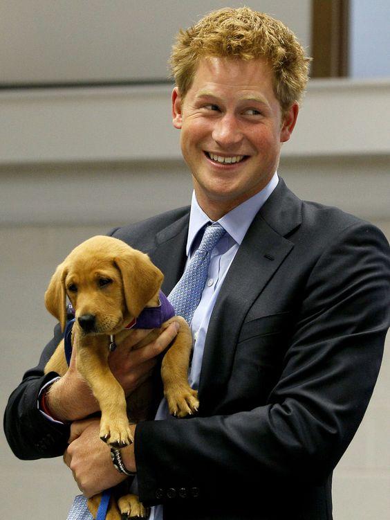 Prince Harry + pup = cute shot!