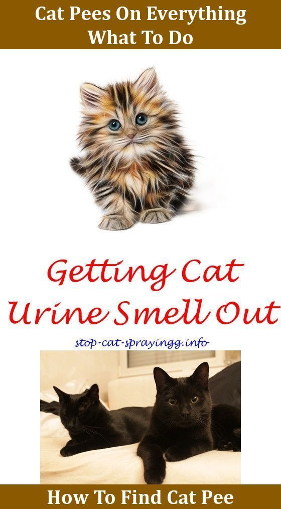 Cat Pee Humor Truths Pet Spray Cat Pee Tips How To Eliminate Cat Urine From Carpet How To Get Rid Of Male Cat Ur Cat Urine Smells Cat Pee Smell Removal Cat