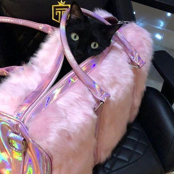 would U let this black cat cross yer Path 2day Fridaythe13th   xypherra