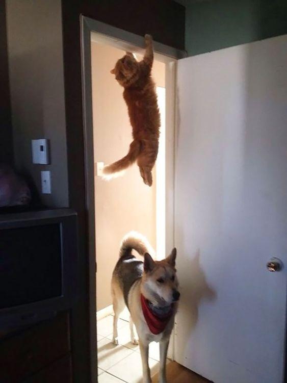 Quand votre patron entre dans votre bureau pour voir si vous travaillez. | 36 fois où les chats ont parfaitement illustré votre vie au travail