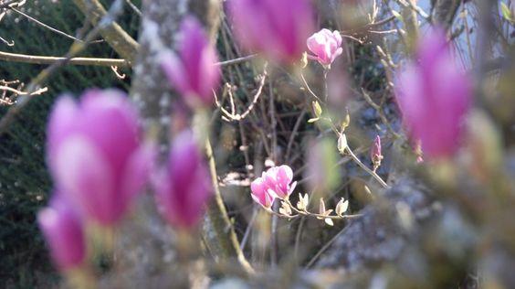 la représentation du printemps aujourd'hui 20 mars 2015