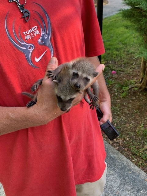 Awe Baby Nuisance Pests Wildlife Raccoon Groundhog Activities