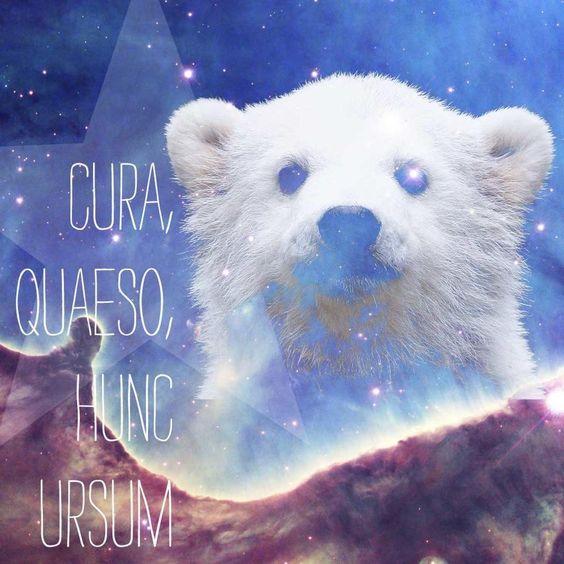 Cura, quaeso, hunc ursum.