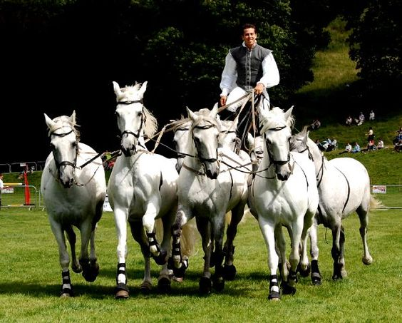 When it comes to man and horse, there is none other more astounding than horse whisper Lorenzo — known as the Flying French Man — whose panache for showmanship and seemingly telepathic communication with his team of stunning grey Lusitano horses is unparalleled.