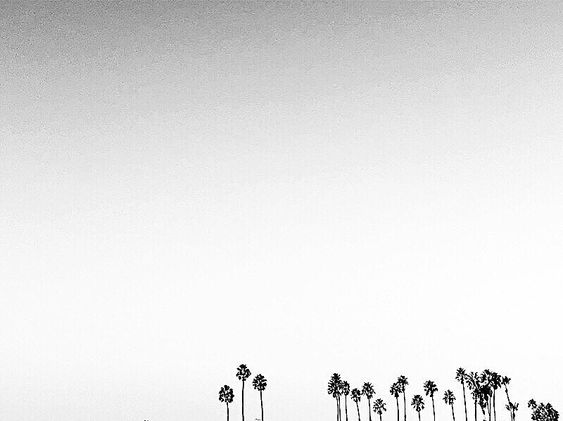 Always dig negative space, always love palm trees (big surprise) and love black and white photography.