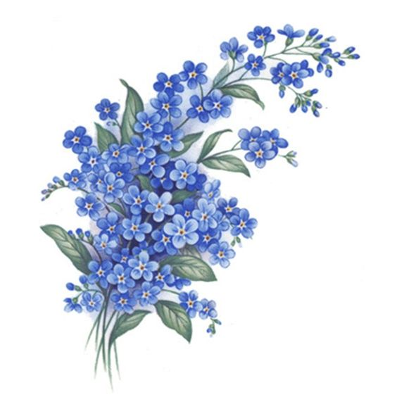 Forget Me Not Knot Flowers Select-A-Size Ceramic Waterslide Decals Bx: