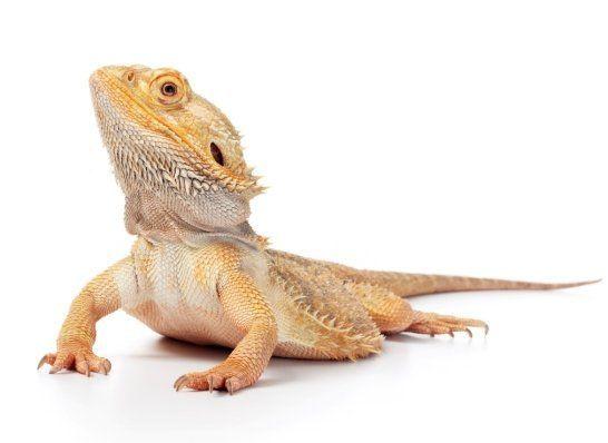 Ferplast Voliere Hemmy Online Bestellen Reptiles Amphibians Amphibians Animals For Kids