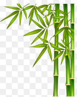 Bamboo Natural Illustration Green Bamboo Green Natural Background Png And Vector With Transparent Background For Free Download Nghệ Thuật Với But Chi Nghệ Thuật La Cay