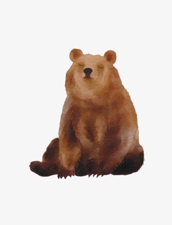 Watercolor Bears Png Animal Bear Bear Illustration Bears Clipart Brown Bear Illustration Bear Art Bear Drawing