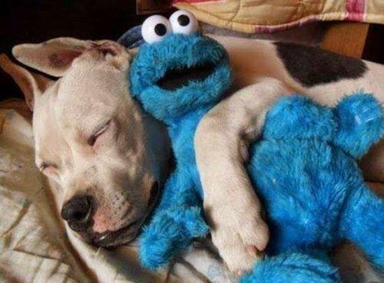 37 animais que não agem feito animais - Blog do Tio Ben