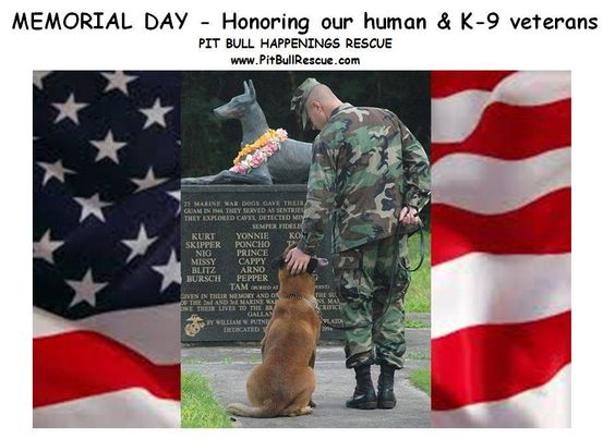 memorial day dog pics