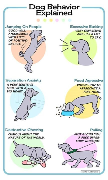dogs behavior Explore braintraining4dogs's board dog games on pinterest | see more ideas about behavior, dog games and manners.