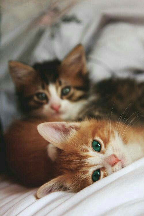 Couple Dp By Ms Status In 2020 Cute Cats Cute Animals Kittens Cutest