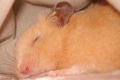 gaiola de hamster adaptada - Pesquisa Google
