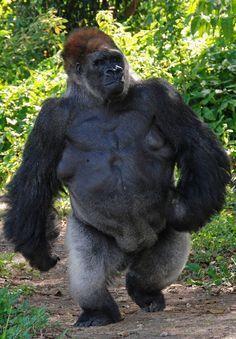 Home Em 2020 Animais Lindos Macacos Engracados Animais Selvagens