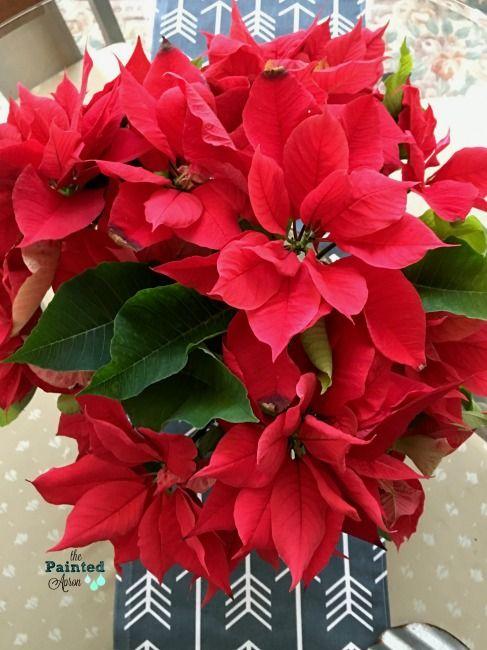 Poinsettia Blooms Valentine S Day Flower Arrangements Valentine Gifts Valentines