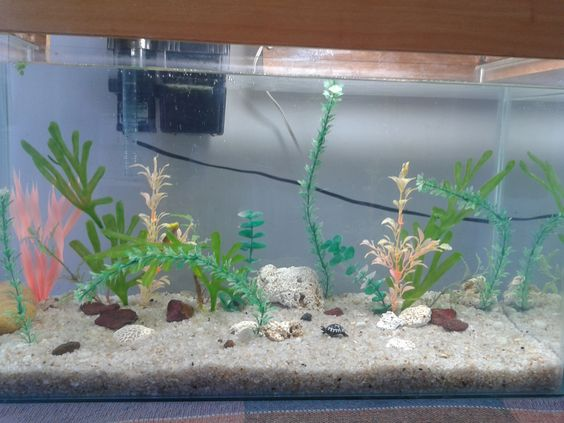 Meu aquário quase terminado.
