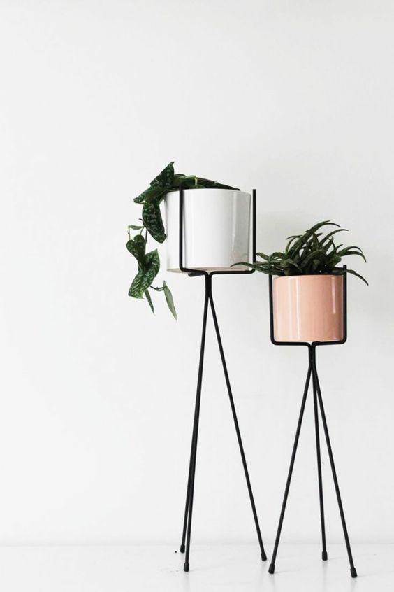 Zimmerpflanzen als Dekoartikel einsetzen