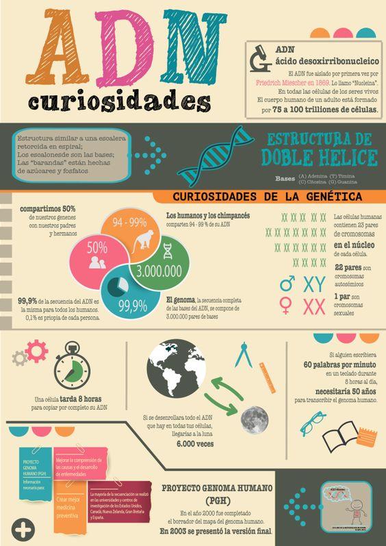 Curiosidades sobre el ADN #infografia #infographic #health
