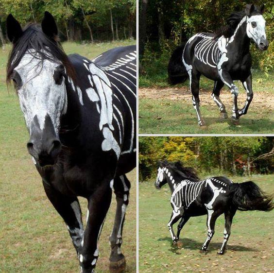 deguisements halloween pour animaux cheval squelette   Déguisements Halloween pour animaux   tortue Starwars python photo oie Miley Cyrus lé...