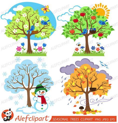 Four Seasons Trees Clipart Seasonal Trees And Birds Clipart Clip Art Vectors Commercial And Personal Use Kalender Fur Kinder Winter Baume Jahreszeiten