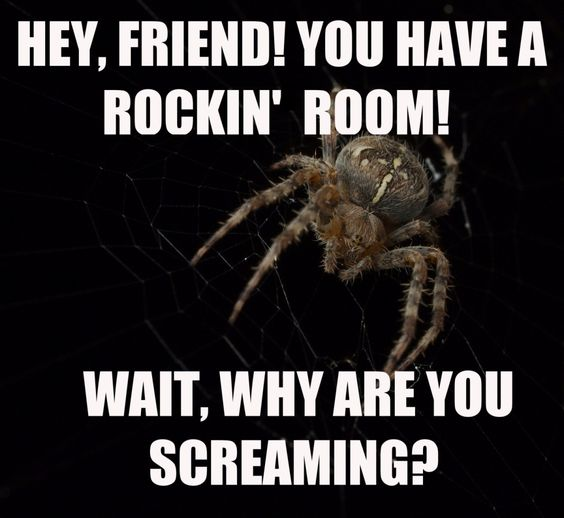 Funny Spider Meme : Reasons spiders aren t that scary