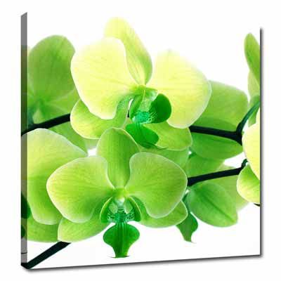 Lime Green Lime Green Canvas Wall Pictures Floral Art