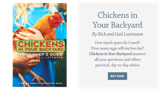 Chickens in Your Backyard By Rick and Gail Luttmann How much space do I need? How many eggs will my hen lay? Chickens in Your Backyard answers all your questions and offers practical day-to-day advice BUY NOW