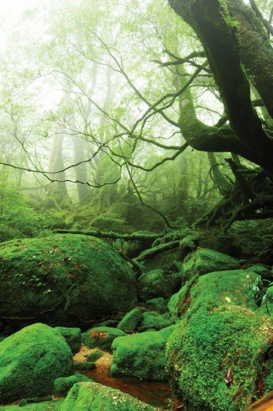 La isla de Yakushima, Japón