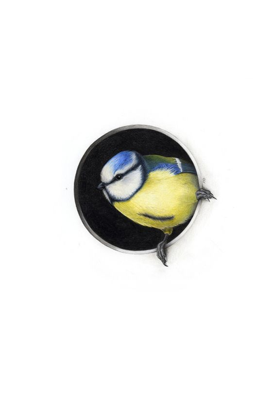 Oiseaux II sur Illustration Served