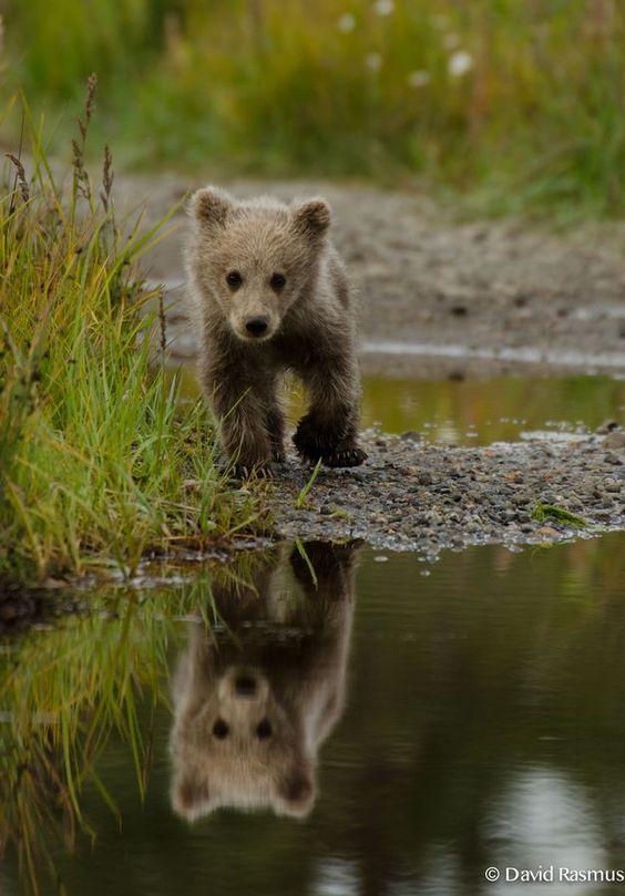 Baby brown bear near Silver Salmon Creek Lodge (Alaska ...
