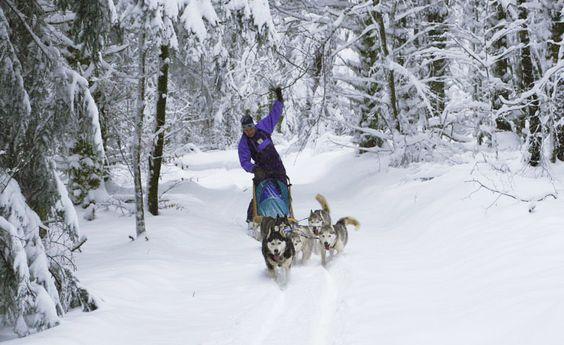 Dans le Parc Naturel Régional du Morvan, vous croiserez peut-être ce transport doux ! #morvan #neige