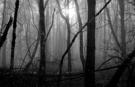 Brumeuse forêt