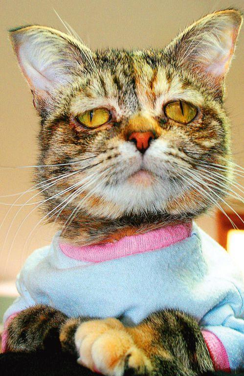 Tucker, la chatte la plus triste du monde, à Arlington, en septembre 2014