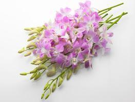 Cómo preservar las flores en cera