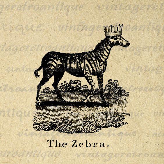 Zebra Tea Towels: Zebra Illustration, Vintage And Tea Towels On Pinterest