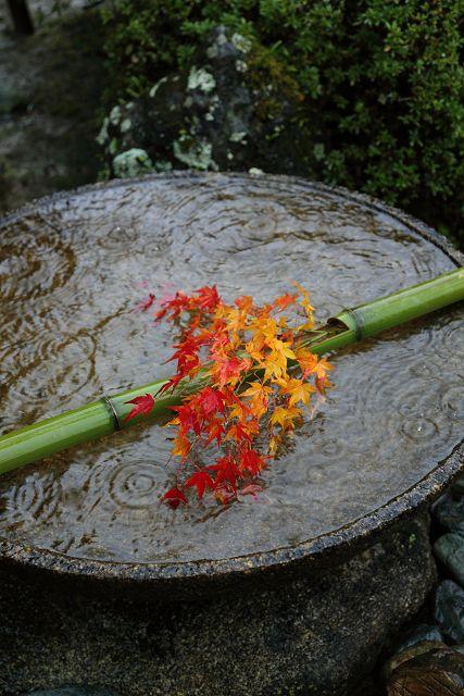 紅葉の叡山電鉄界隈 -圓光寺 書院- : MEMORY OF KYOTOLIFE