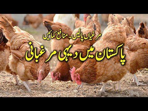 Desi Murghi Poultry Farming Stan