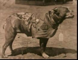 Sergeant Stubby died on March 16, 1926, as a hero, yet today, many people do not know who he is. Sergeant Stubby is the most decorated dog in military history, and the only dog to have been promoted during battle. He fought for 18 months in the trenches for France during WW1 for 17 battles. Stubby warned his fellow soldiers of gas attacks, located wounded soldiers in No Man's Land, and listened for oncoming artillery rounds. He was also responsible for the capture of a German spy at Argonne…