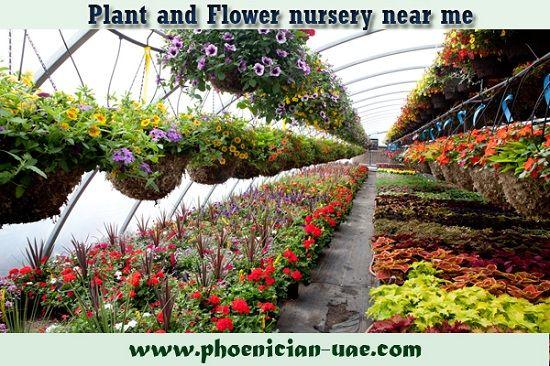 Plant And Flower Nursery Near Me Fruit Tree Garden Plant Nursery Garden Projects
