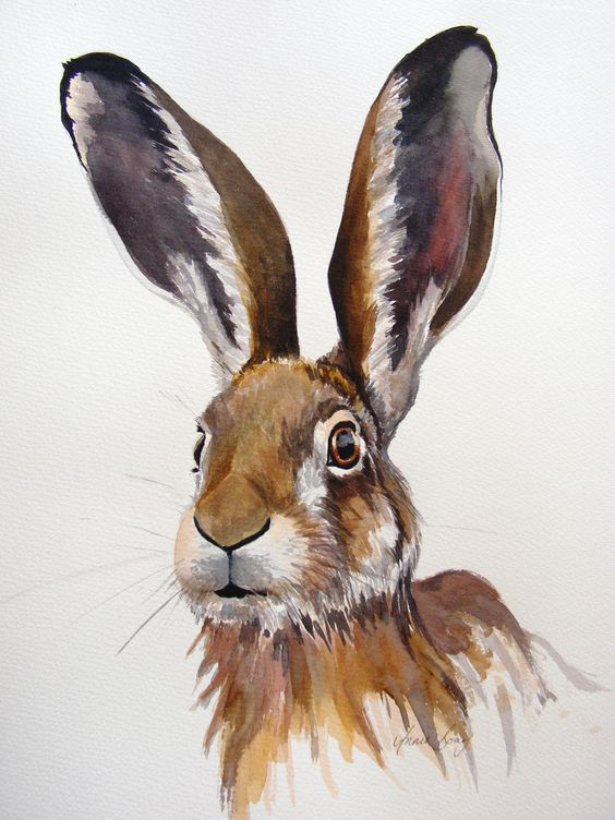 hare. A very similar print of this now available on my web site http://www.gingerhareart.co.uk/
