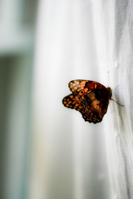 There's a Butterfly by ~Shona Leah on Flickr.