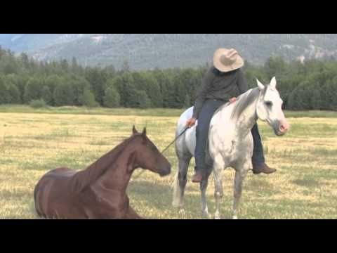 Jonathan Field, Canadian horse trainer